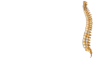 University Spine Center – Wayne NJ